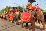 บุญผะเหวดโคราชนำช้าง 13 เชือก แห่พระอุปคุตรอบเมืองโนนสมบูรณ์